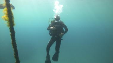 Primer diplomado de investigación subacuática en Colombia