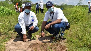 Hocol sembrará 30 mil árboles en La Guajira