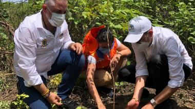 En Maicao se inició la sembratón de La Guajira