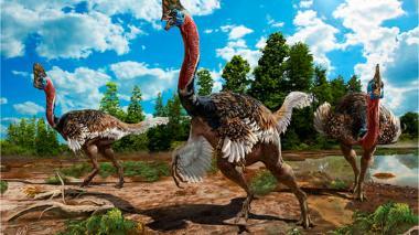 En imágenes   Así era el 'Corythoraptor jacobsi', una nueva especie de dinosaurio descubierto en China