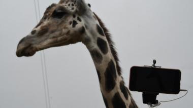 Clic: diez  curiosas fotos de animales que no puedes dejar de ver