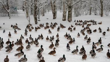 Las curiosas fotos que deja la tormenta de nieve