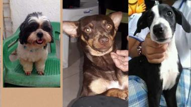 Mascotas Wasapea | Estas mascotas buscan a sus dueños