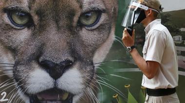 Zoológico de Cali, primero en abrir sus puertas en América Latina