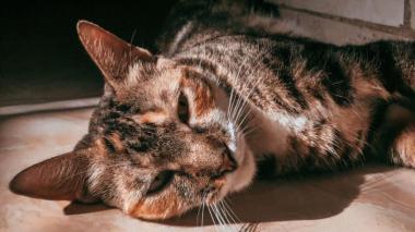Lectores de EL HERALDO celebran el Día del Gato con fotos de sus mascotas