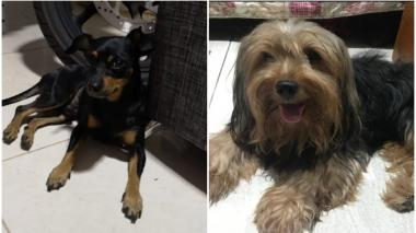 Mascotas Wasapea | Ayudemos a 'Romeo' y 'Bolty' a regresar a casa