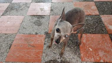 Mascotas Wasapea | Ayuda a encontrar a 'Mabechi'