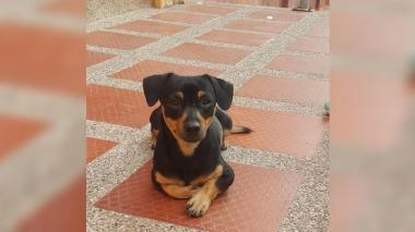 Mascotas Wasapea | Ayudemos a este perrito a regresar a casa