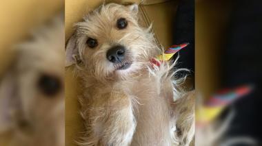 Mascotas Wasapea | Familia busca a 'Pepe' en Altos de Riomar