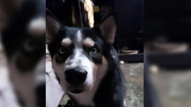 Mascotas Wasapea | Familia busca a 'Verón'