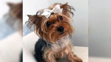 Mascotas Wasapea | 'Chelsea' es buscada por su familia