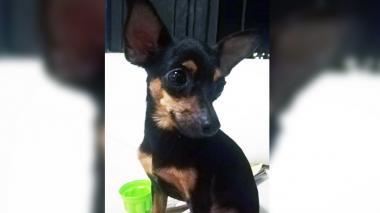 Mascotas Wasapea | 'Lucas' se perdió en Los Robles