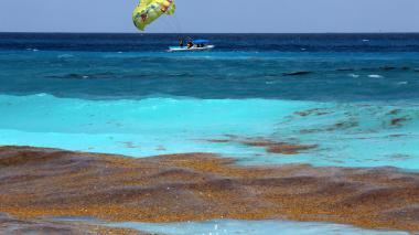 El sargazo invade las playas del Caribe mexicano