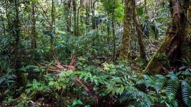 El bosque más nublado de Centroamérica, un poderoso almacén de carbono