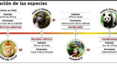 Infografía: Estado de conservación de las especies