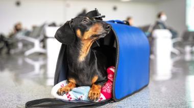 Viajar en bus con mascota