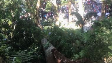 En video | Árbol de 200 años cae y deja 12 muertos en Portugal