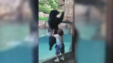 En video   Oso que salta a la par de un niño se viraliza en redes