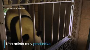 Osa panda pinta obras que se venden por casi 500 euros