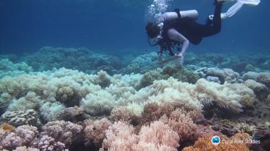"""Este es el coral """"más resistente al calor"""""""