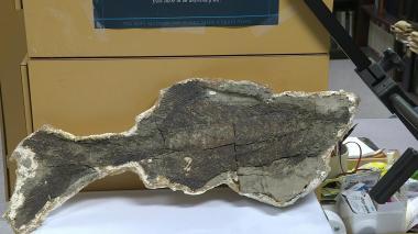 Fósiles narran el momento en que un asteroide cambió la Tierra