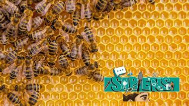 Sapiens | Las abejas son fundamentales en el medio ambiente