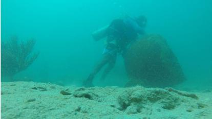 Evalúan efectos de Matthew en colonias de corales del Tayrona