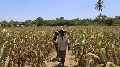 Proyecto de formalización de tierras legalizaría mayor despojo: Agencia Nacional de Tierras