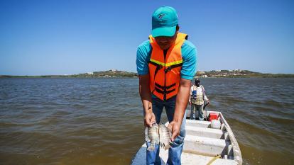 ICA investiga estado del agua de lago El Cisne tras mortandad