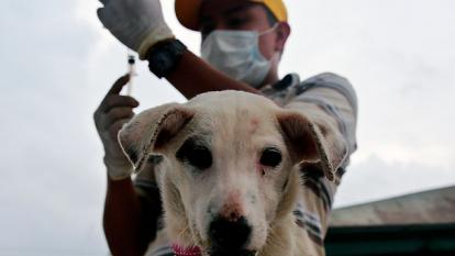 El refugio de voluntarios que  acoge perros y gatos