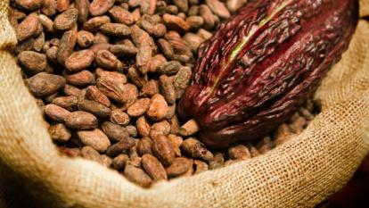 "Colombia logra ""récord"" de 14.600 toneladas de cacao en primer trimestre"