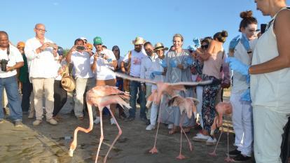 Primera dama de la nación liberó flamencos rosados en La Guajira