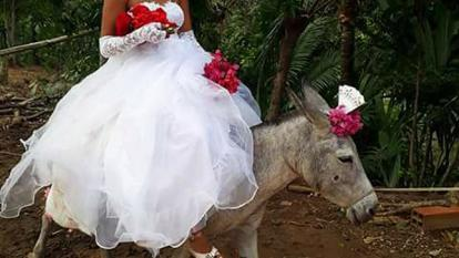 Novia llega a la boda... ¡montada en un burro!