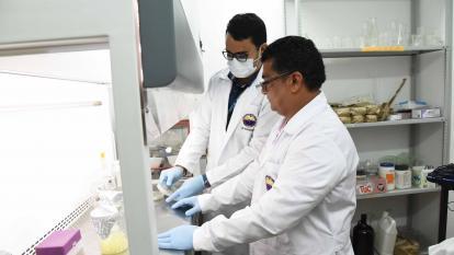 Patentan invención de fungicida para combatir la Sigatoka Negra en Santa Marta