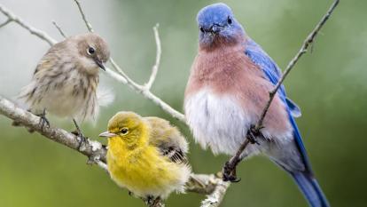 Colombia se alista para repetir como el país con mayor avistamientos de aves