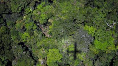 Reforestar podría reducir dos tercios el carbono del planeta