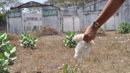 Cultivos tradicionales de la Costa que están quedando en el olvido