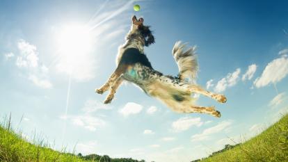 Actividades físicas, cognitivas, de entrenamiento y obediencia, además de enriquecimiento nutricional son clave en la rutina animal.