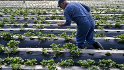Agricultor en el campo.