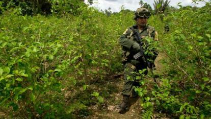Asesinan a cinco personas cuando erradicaban cultivos ilícitos