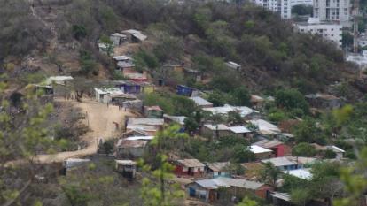 Alcaldía busca frenar erosión en Cerro de La Popa con plan de reforestación