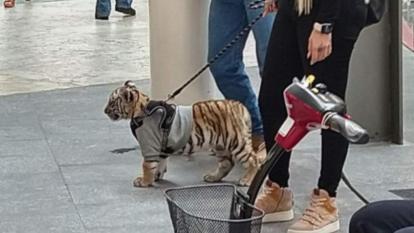 Controversia en México por mujer que paseó tigre cachorro en centro comercial