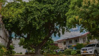 Árbol en mal estado causa molestias en Los Trupillos