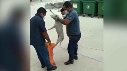 Sena retira del cargo a coordinador e investigará caso de maltrato animal