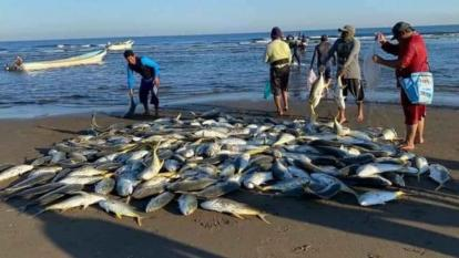 Pescaodores de Moñitos ponen sobre la arena kilos del jurel de gran tamaño.