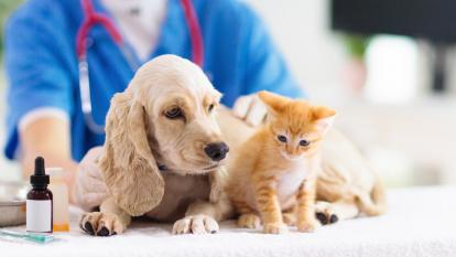 ¡Ojo con las vacunas de su mascota!