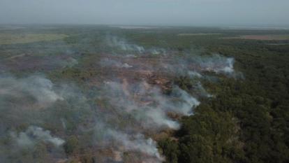 Parque Isla de Salamanca lleva más de lleva años sufriendo por las llamas.