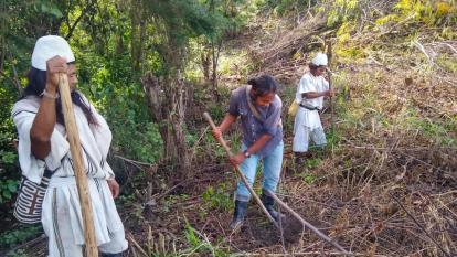 Arhuacos avanzan en proyecto panelero autosostenible en la Sierra Nevada