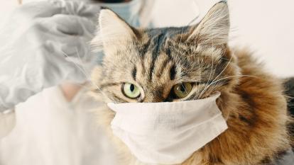 Nueva variante de la covid-19 puede afectar a perros y gatos