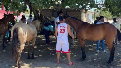 Caballos usados en coches turísticos son valorados en Cartagena